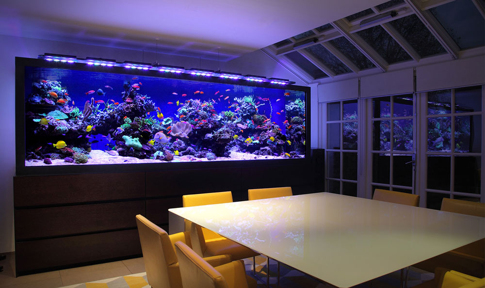 . Change The Look Of Your Room With These Home Aquarium Tanks