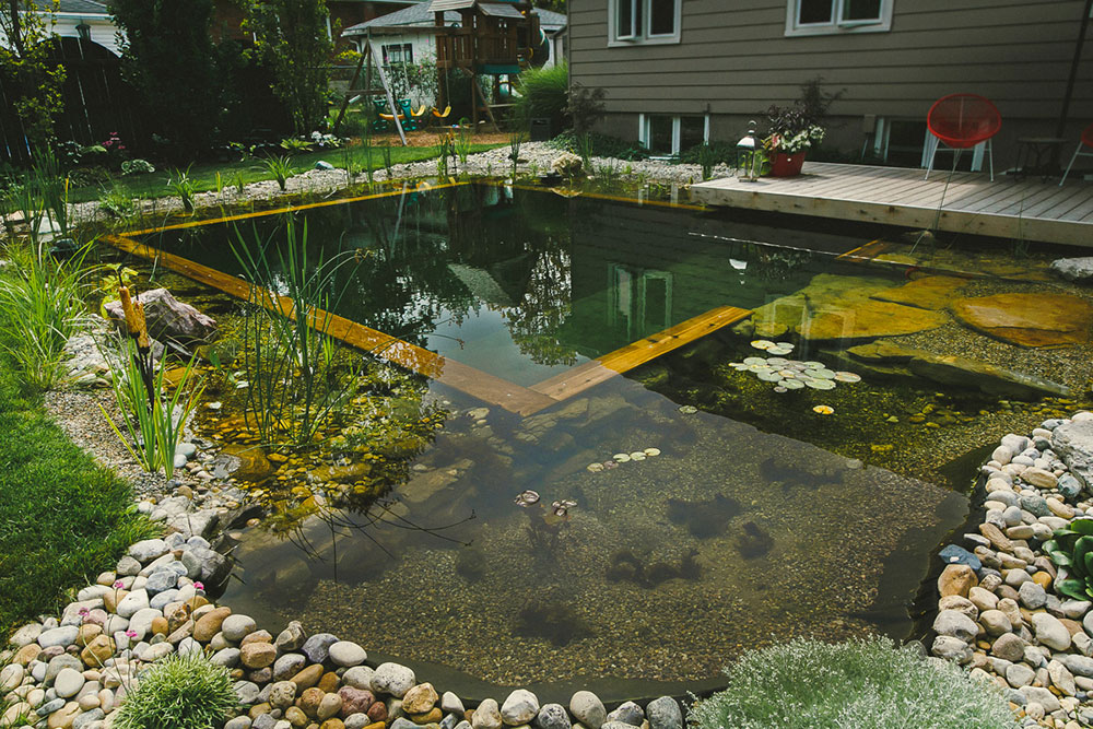 DIY pool: How to build a natural swimming pool