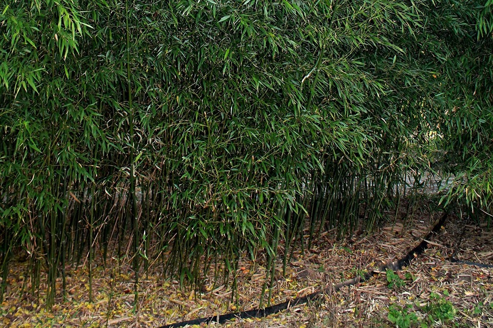 The different types of bamboo that you should know about