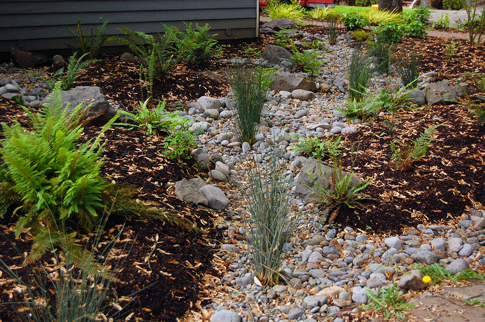 Rain garden design ideas you can create around your house